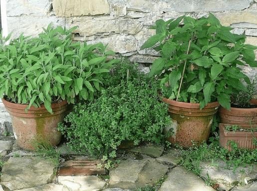 Newbie Garden Tips