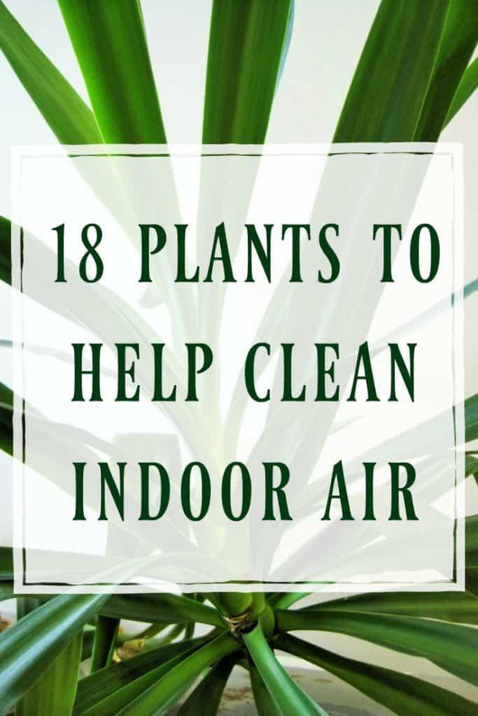 Plants to Help Clean Indoor Air