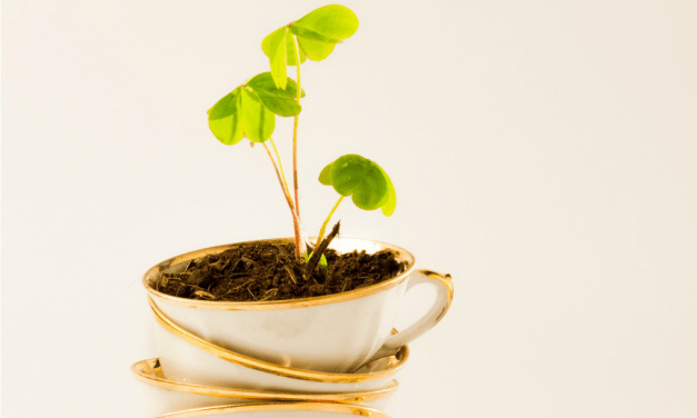 Using Tea Leaves as a Fertilizer