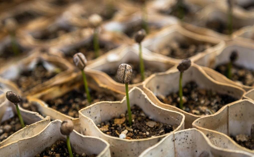 5 Repurposing Tips for the Garden