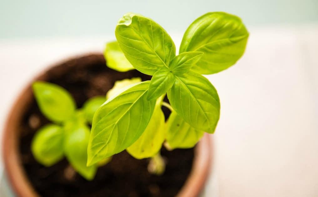 Gardening for Newbies - herbs