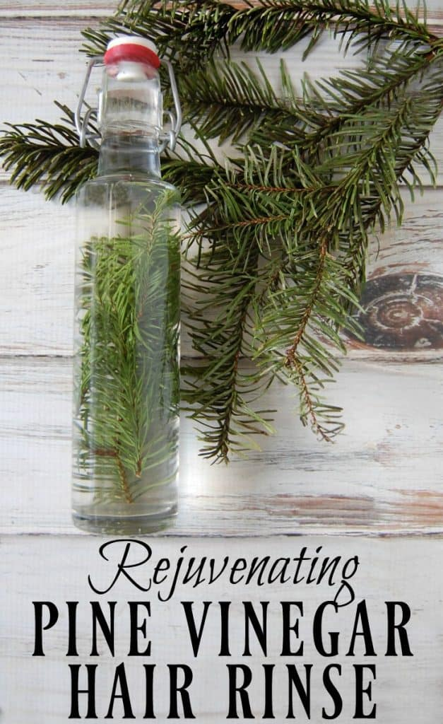 Start hunting down those pine needles! This rejuvenating pine vinegar hair rinse will be your new favorite way to condition your hair! Great for dandruff, eczema, psoriasis, and adding shine to hair. #pine #hairrinse #fir #conditioner #vinegarrinse #haircare