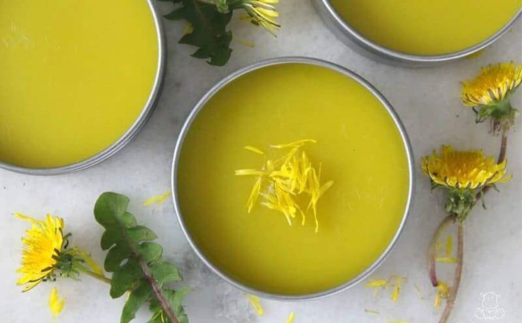 Homemade Dandelion Salve
